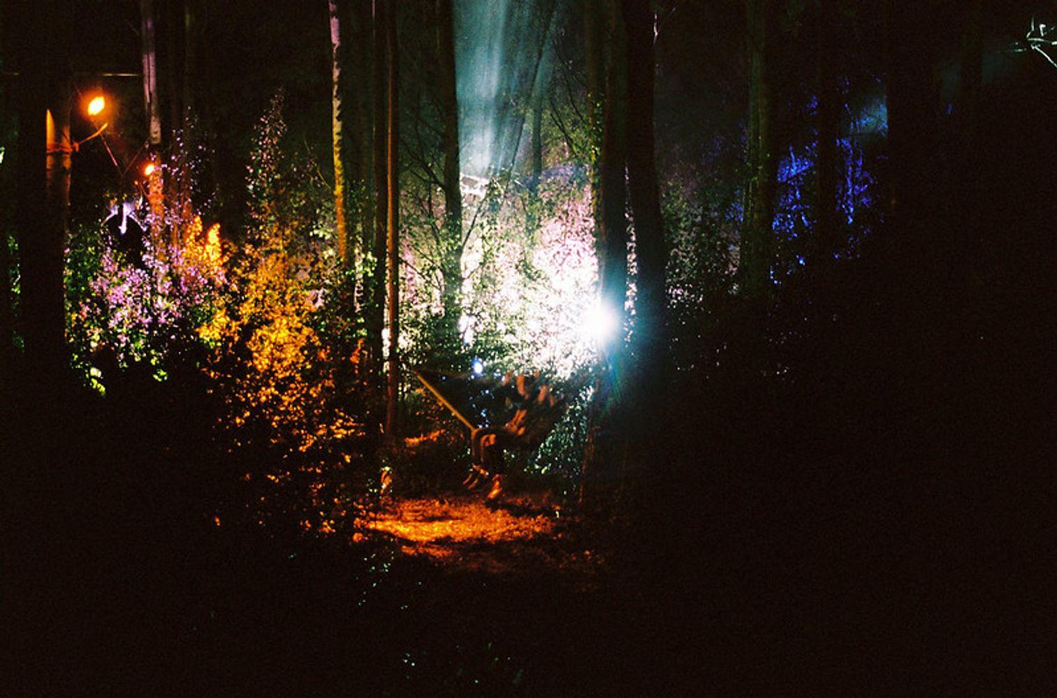 Hängematten im Birkenwäldchen