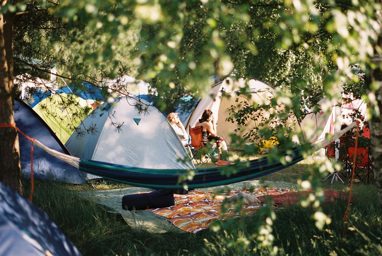 Blick durch die Birken auf eine Hängematte und Zelte.