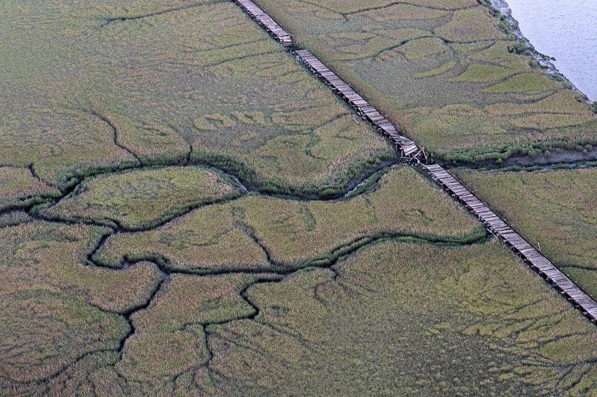 Wetland Management