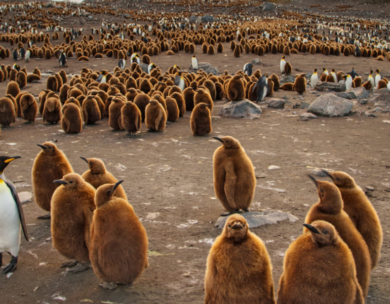 A outlier penguin between others