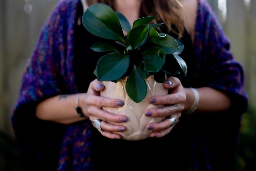 hands holding potted plant