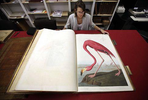 John-James-Audubons-Birds-of-America-3.jpg