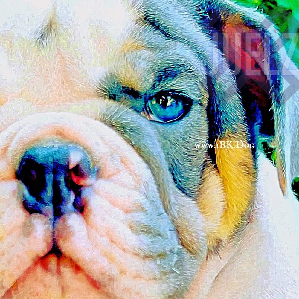 iBulldogges image