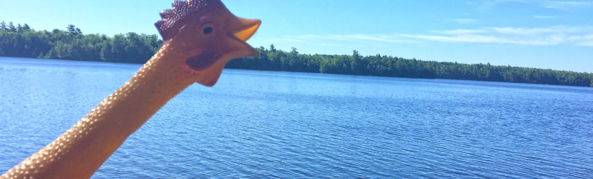 rubber chicken in front of lake landscape outdoors