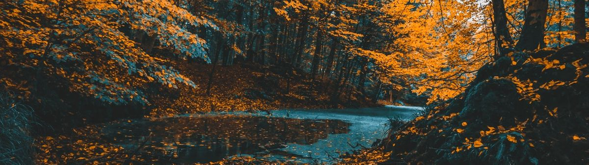 orange and teal forest composition