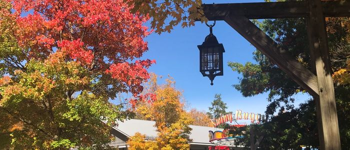 Colorful fall leaves on trees at DelGrosso's Park