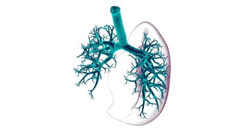 Taking a Breath: Advances in Inhaled Biologics; Image: mybox/Stock.Adobe.com