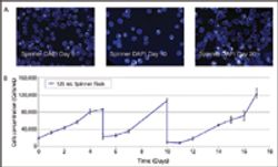 Scale-up of Human Mesenchymal Stem Cells on Microcarriers in Suspension in a Single-use Bioreactor
