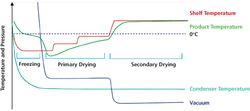 Lyophilization: A Primer