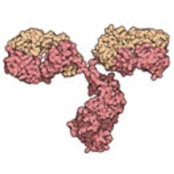 Generating a Fully Processed Antibody