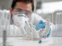 Opinion: The Debate Over Animal Toxicology Studies