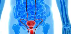 Treatment with Cisplatin-Based Chemotherapy Yields High Risk of Mortality Unrelated to Disease in Testicular Cancer