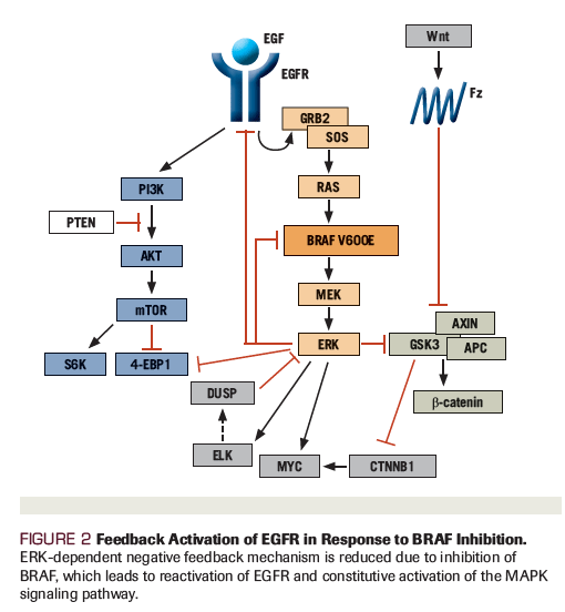 Mutația BRAF VE în tumori - Synevo