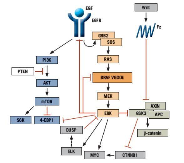 Evolving Strategies For The Management Of Braf Mutant Metastatic Colorectal Cancer