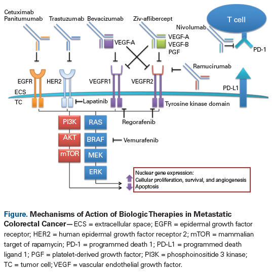 Precision Medicine In Metastatic Colorectal Cancer Relevant Carcinogenic Pathways And Targets Part 1 Biologic Therapies Targeting The Epidermal Growth Factor Receptor And Vascular Endothelial Growth Factor