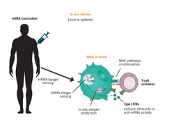 Messenger RNA Vaccines: Beckoning of a New Era in Cancer Immunotherapy