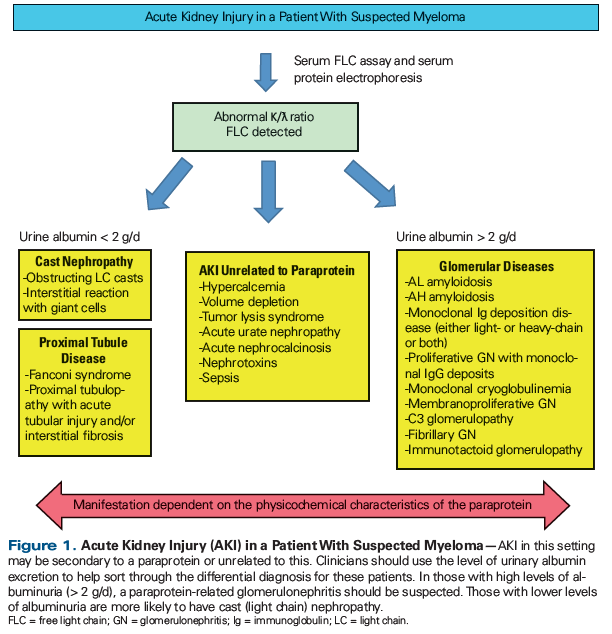 Acute Kidney Injury In Patients With Cancer Cancer Network