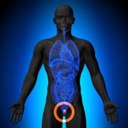 Yoga May Promote Antitumor Immune Responses and Boost Quality of Life in Prostate Cancer