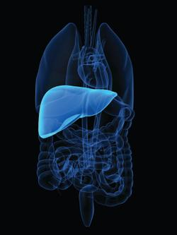 Durvalumab Plus Tremelimumab Combo Provides Significant Survival Benefit in First-Line Unresectable Hepatocellular Carcinoma