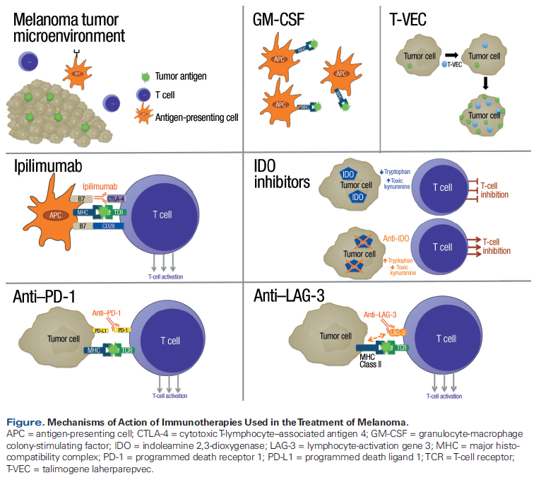 Combination Controversies Checkpoint Inhibition Alone Or In Combination For The Treatment Of Melanoma Cancer Network
