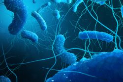 Bacterial Coinfections Among US Patients With Coronavirus Disease 2019