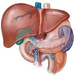 Public Health Watch: Enhanced Monitoring for Hepatitis B Among Liver Transplant Patients May Be Needed