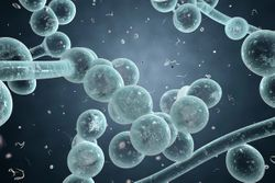 Fosmanogepix Shows Promise as an Effective Novel Antifungal in POC Trial