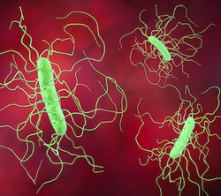 Stem Cell Patients with C Difficile Benefit from Vancomycin, Fidaxomicin