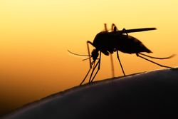 West Nile Virus: Can Climate Change Cause Mosquito Migration?