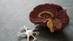 Risk Factors Linked With Brain Complications in COVID-19 Patients