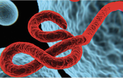 Investigational Ebola Vaccine Regimen Shows Immune Response in Kids and Adults