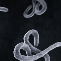 10 Key Pillars to an Effective Ebola Response