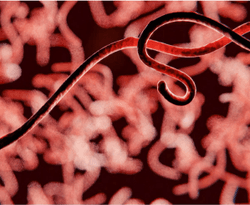 Treating Zaire ebolavirus With Ansuvimab-zykl