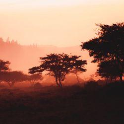 Resistant Malaria Parasite Mutations Observed in Rwanda