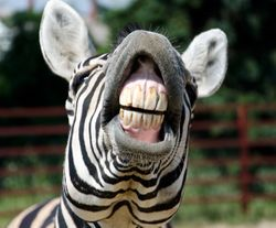 5 Fun Facts About Animal Teeth