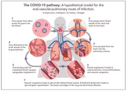 New Research Shows Link Between COVID-19 Transmission and Poor Oral Hygiene