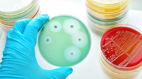 Antimicrobial Stewardship: Protecting Global Health
