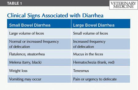 medicine for vomiting and diarrhea