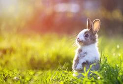 Deadly, highly contagious rabbit virus discovered in Minnesota