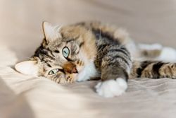 Management of the blocked cat for veterinary technicians