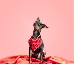 The dvm360 toolkit: Honing in on heartworm disease