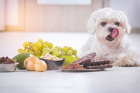 Common Causes And Signs Of Food Intolerance In Veterinary