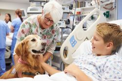 New study to examine effect of therapy dogs during pediatric ER visits