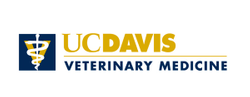 UC Davis announces new summer virtual academy