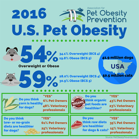 U S Pets Getting Fatter According To Pet Obesity Research Report Dvm 360