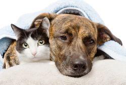 Pet health insurance respiratory claims remain flat