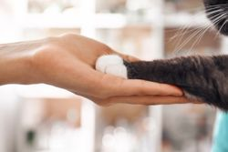 5 must-read veterinary well-being articles