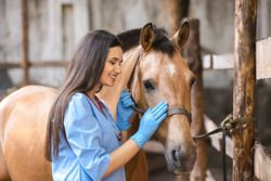 Fear Free launches equine certification program