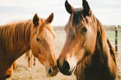 Dechra acquires veterinary marketing and distributions rights for Equine ProVet APC
