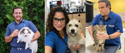 Shattering the glass ceiling in veterinary medicine